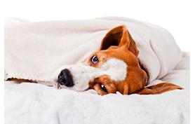 L'animal atteint d'épilepsie souffre-t-il ?