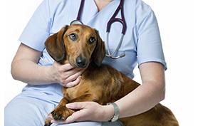 chien consultation2 - 177x278