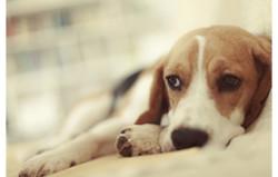 stress du chien épileptique