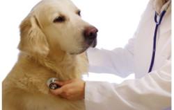 consultation vétérinaire177x278