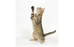 chat en crise d'épilepsie