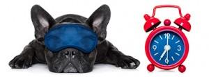 heure-hiver-epilepsie-du-chien