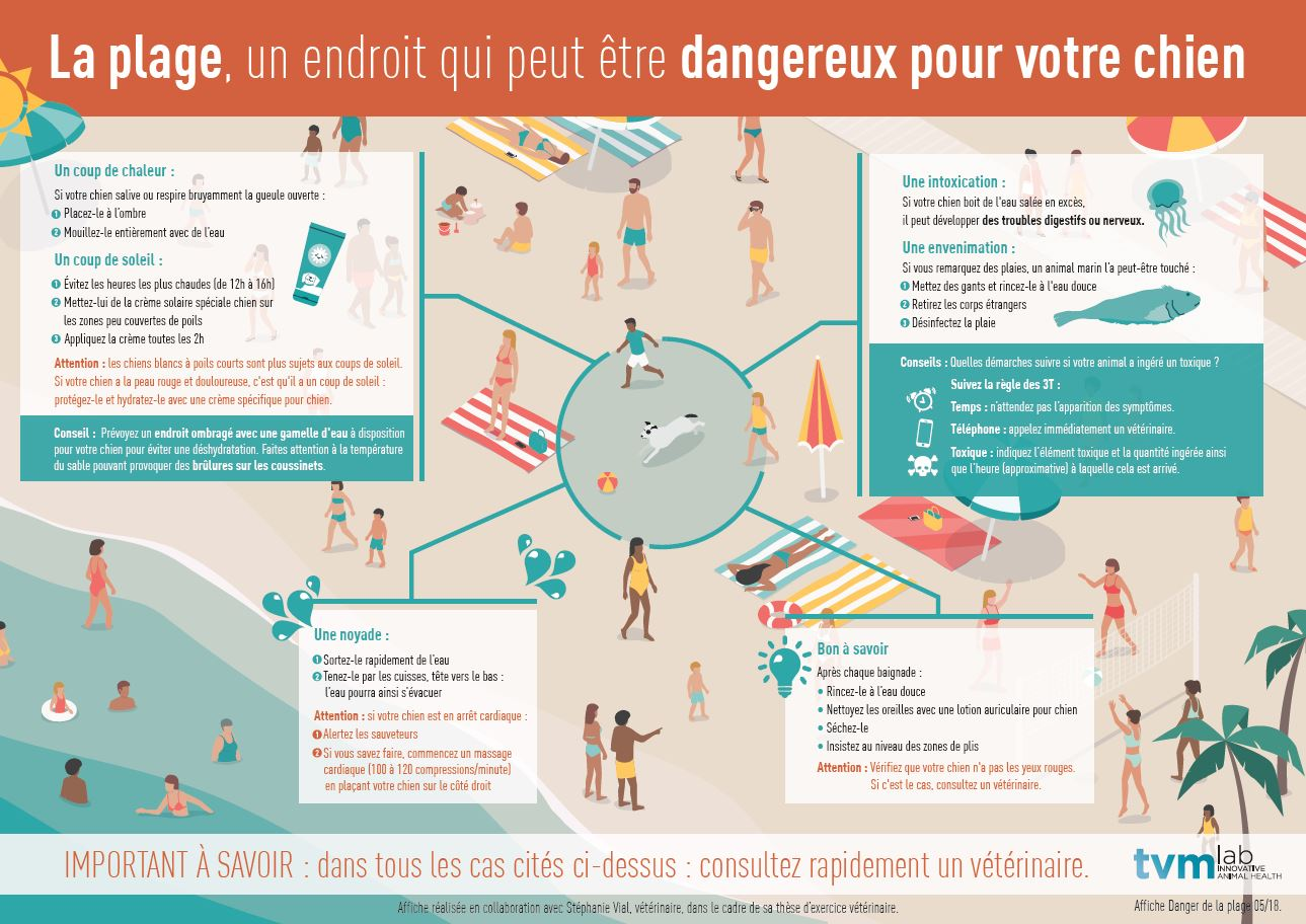 infographie-Dangers-plage-chiens