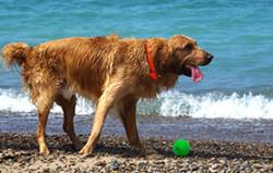 plage-chien