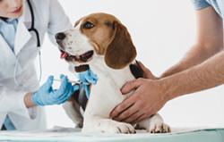 vaccination chien épileptique
