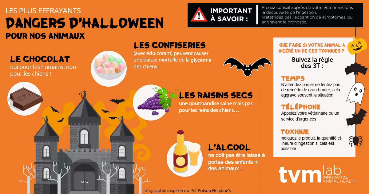 infographie halloween dangers intoxications animaux
