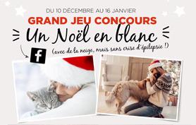 Concours-photo «Un Noël en blanc»