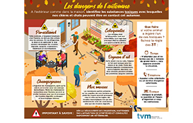 risques intoxication automne