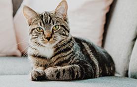 Le scanner et l'IRM chez un chat epileptique