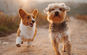 Découvrez tout sur le scanner ou l'IRM pour votre chien épileptique ?