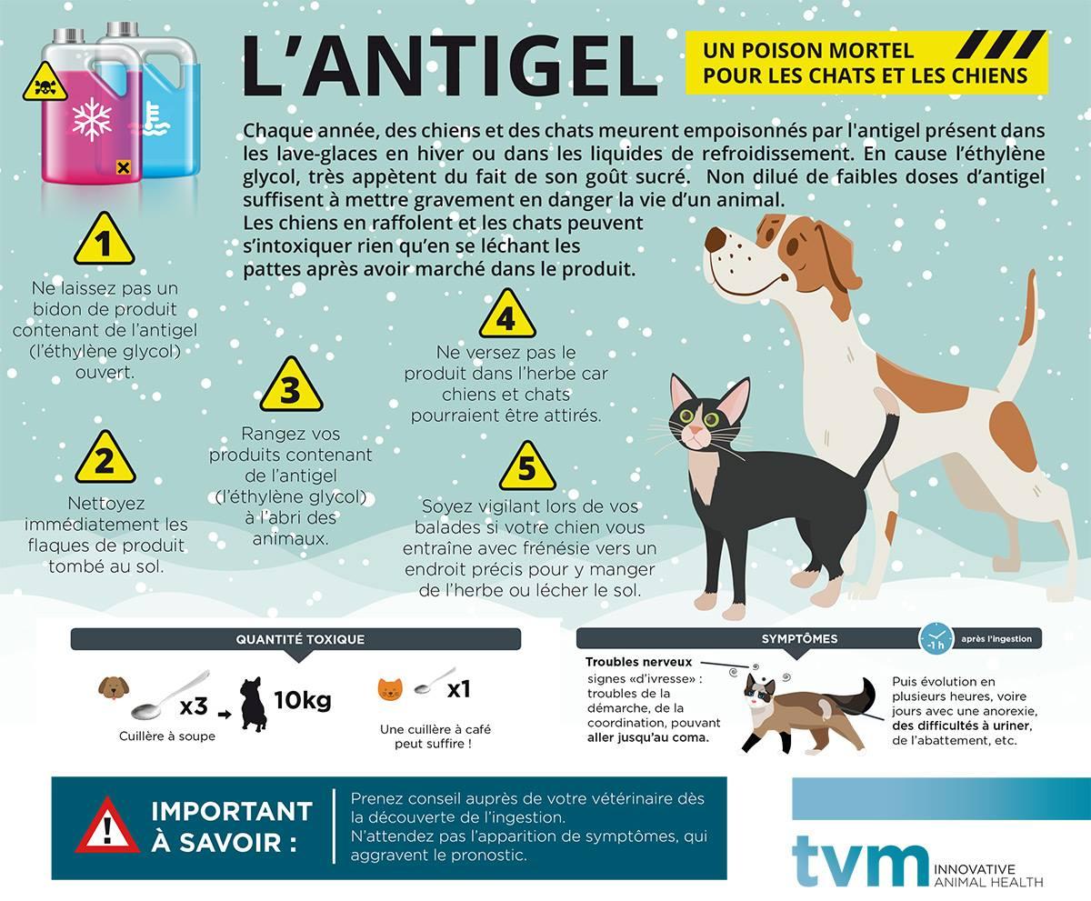 """Infographie """"L'antigel, un poison mortel"""""""