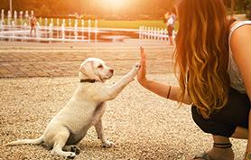 éducation chien épileptique