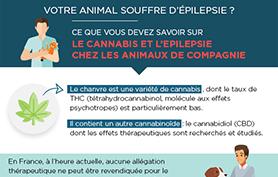 Infographie : cannabis thérapeutique et épilepsie animale.