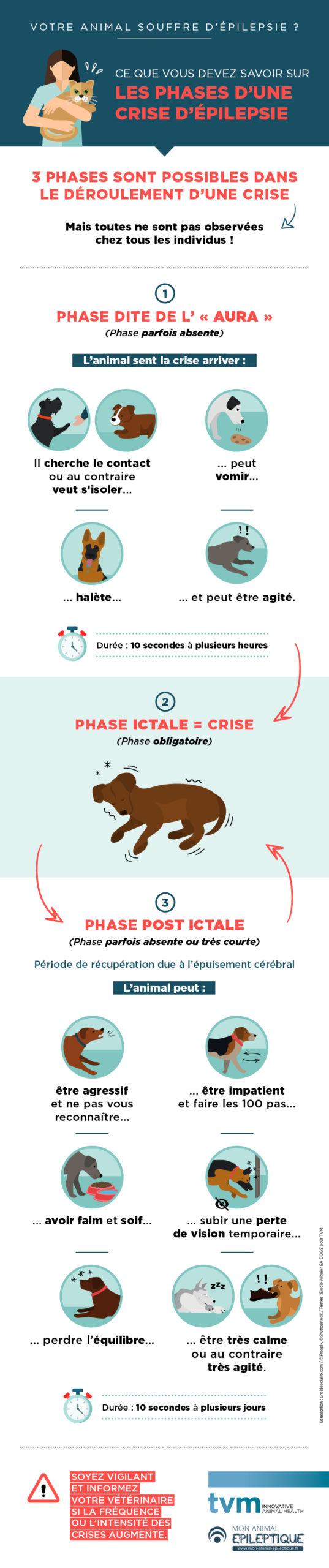 infographie sur les différentes phases d'une crise d'épilepsie : phase d'aura, phase ictale, phase post-ictale